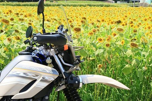 sunflower005.jpg